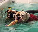 k9%20aquatics%20pic_edited.jpg