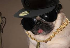dress up your pet day pic19