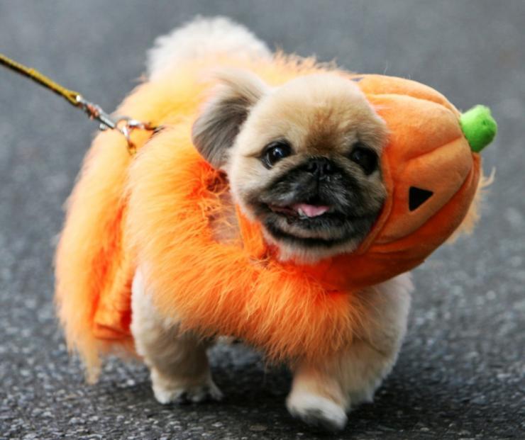 dog costume12.jpg