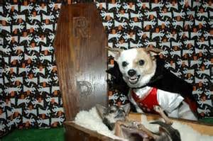 dog costume20.jpg
