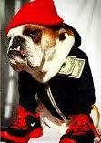 dress up your pet day pic23jpg (2)