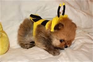 dog costume14.jpg
