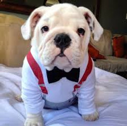 dress up your pet day pic22