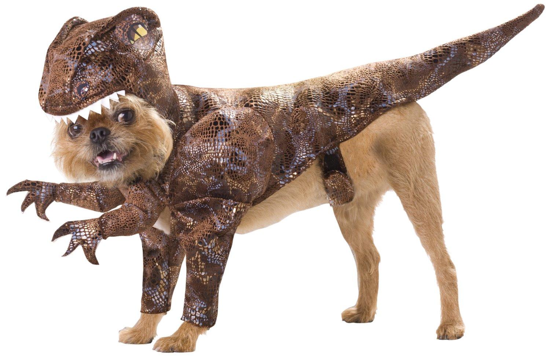 20-Absolutely-Amazing-Dog-Halloween-Costumes-1