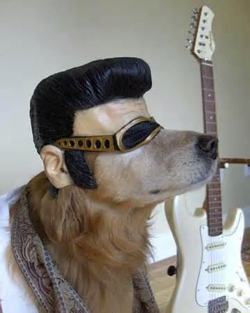dog costume.jpg