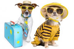 dress up your pet day pic12