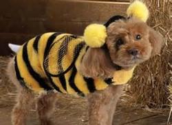 dog costume19.jpg