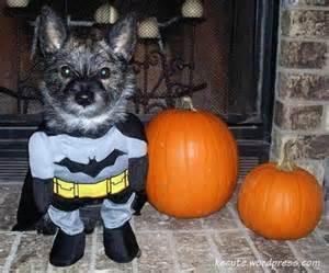 dog costume16.jpg