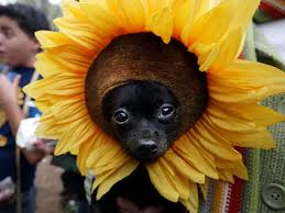 dress up your pet day pic7
