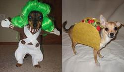 dog costume2.jpg