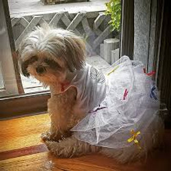 dress up your pet day pic10