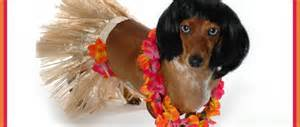dog costume17.jpg