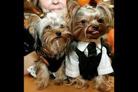 dress up your pet day pic4