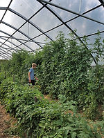Sept hoophouse (2).jpg