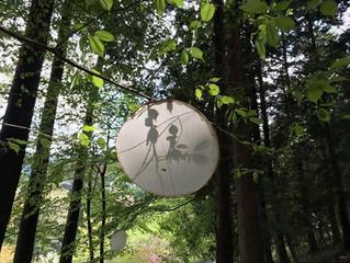 吉田和代さんの捉えた森