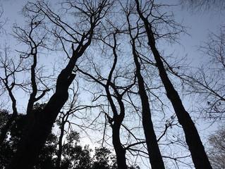 森の展示室、現地説明会