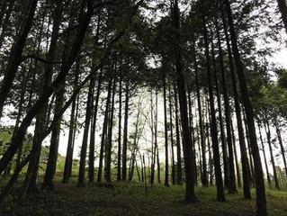 わち山野草の森で