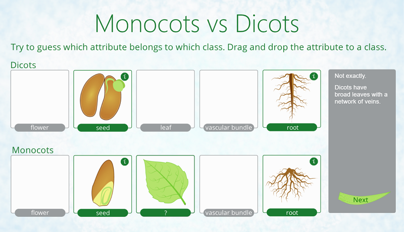Drag&Drop Dicots Monocots Comparing