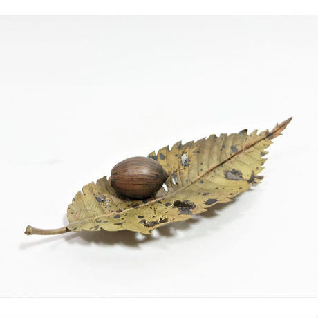 枯葉団栗(Acorn&Leaf)