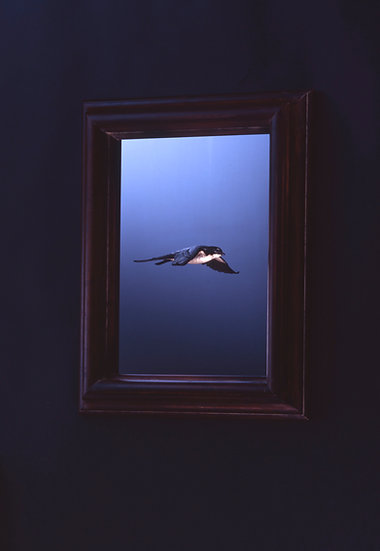 Swallow in the frame    (Type-B)