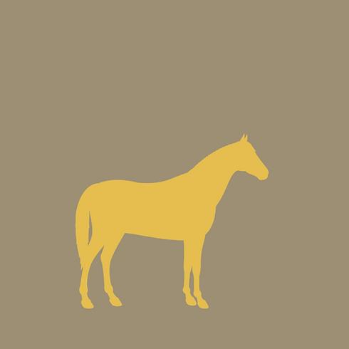 Osteopathie für Pferde Mobile Tierarztpraxis Minden Porta Westfalica