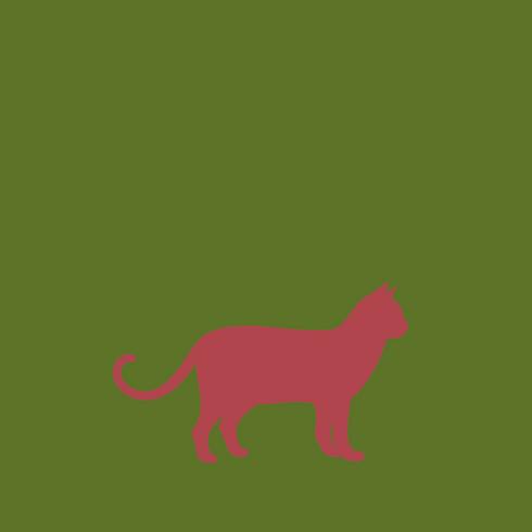Zahnstein entfernen bei Katzen und Hunden in Minden und Porta Westfalica