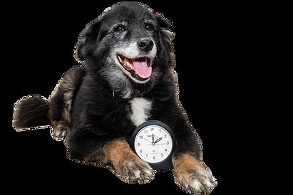 Hund mit Uhr