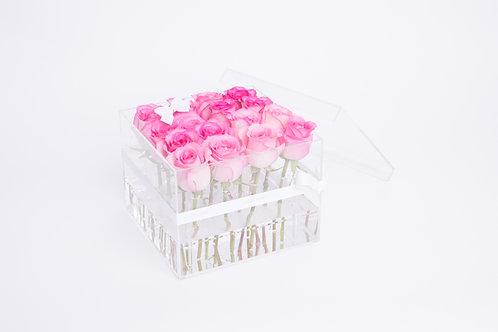 Aqua Fairy -16 Hot Pink Roses