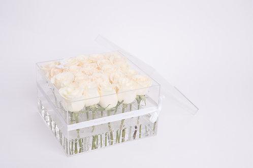 Aqua Fairy -25 White Roses
