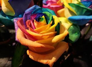 Showing PRIDE Love for LGBTQ+ Seniors