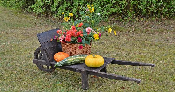 thanksgiving for seniors home caregiving