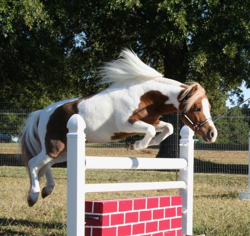 Sid, Horse Hugs, caregiving