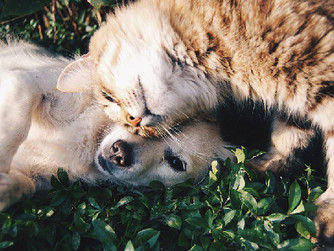 Can't Have Pets? 5 Ways to Help Clients Interact with Animals