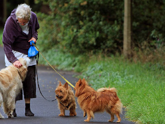 12 Ways Seniors Can Benefit from Companion Animals