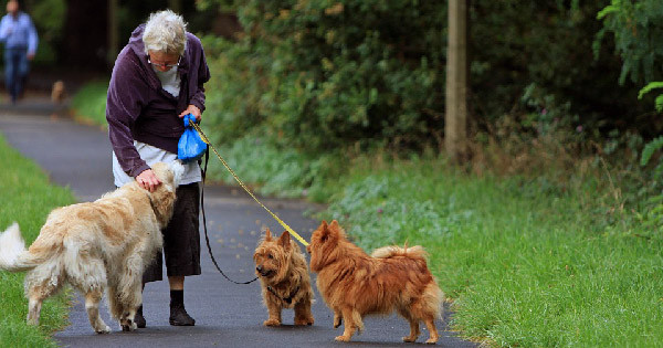 Benefits of Companion Animals for Seniors home caregiving