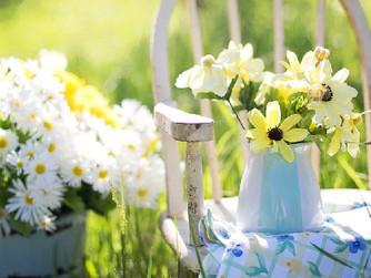 Elderly Green Thumbs: Health Benefits of Gardening for Seniors