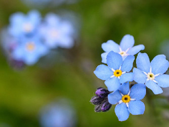 15 Forget-Me-Not Facts About Dementia