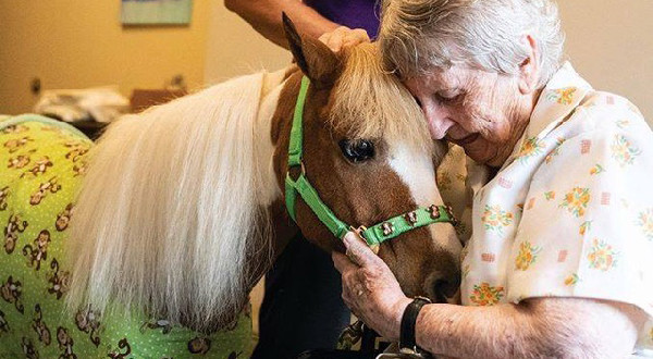 miniature horse therapy, equine therapy, senior care, in home care