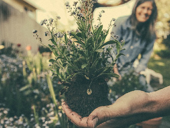 Home Caregiving Tips: Gardening for Dementia