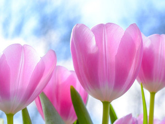 Caregiving Allows Peace to Bloom