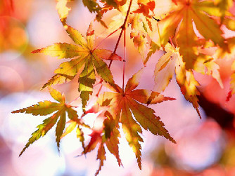 10 Ways Caregivers Can Help Seniors Celebrate the Harvest Season