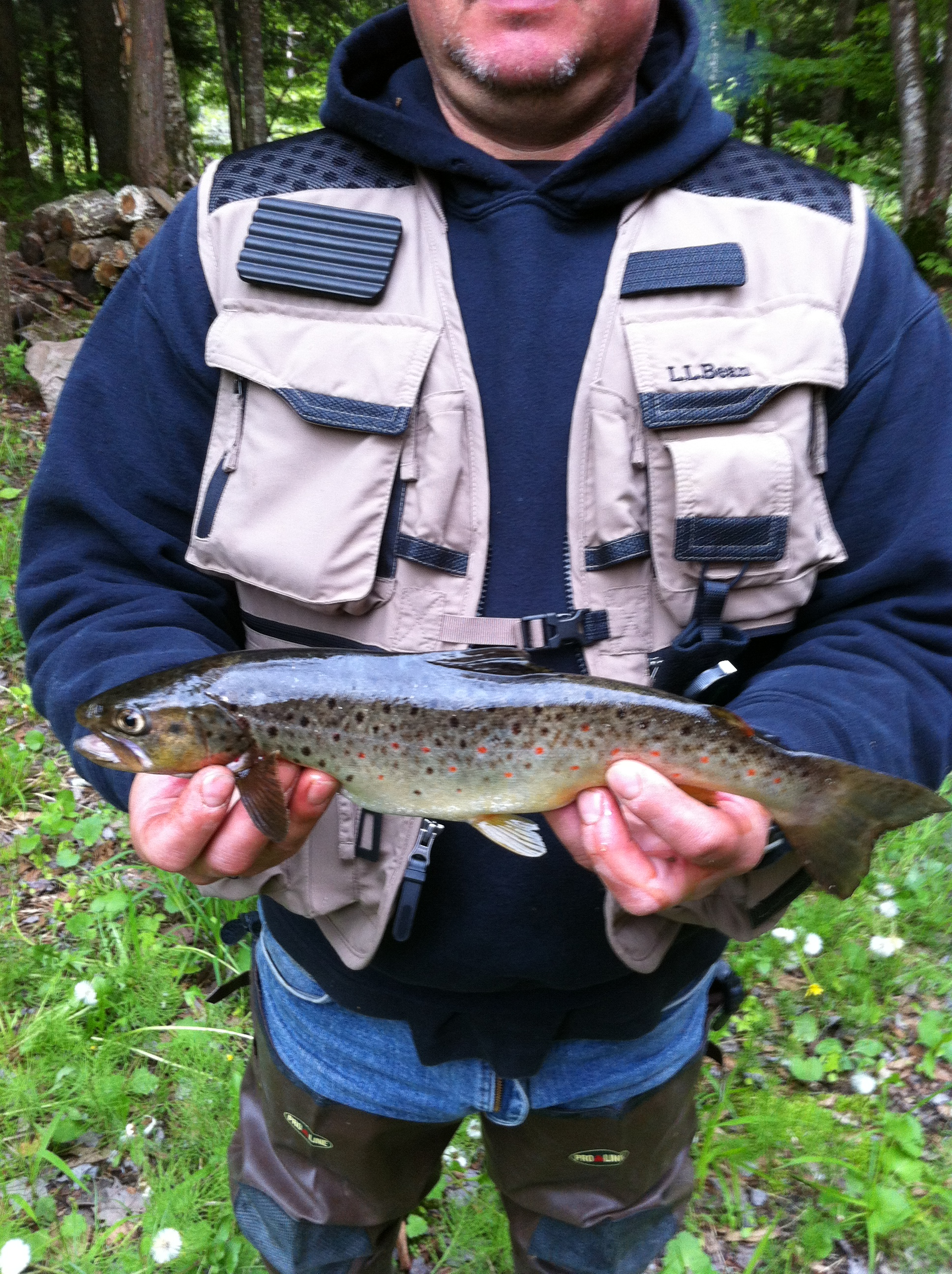 Brown Trout caught in the West Branch of the Salmon River