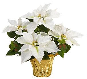 white_-poinsettias-10026-64_1000_grande.
