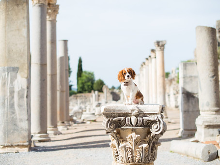 Female dog names from ancient Rome