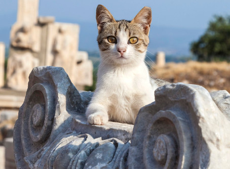 Unique kitten names from Roman Antiquity that will steal your heart