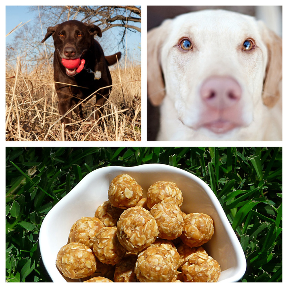 A Peanut Butter Oatmeal Dog Treat Recipe by Home Style Austin