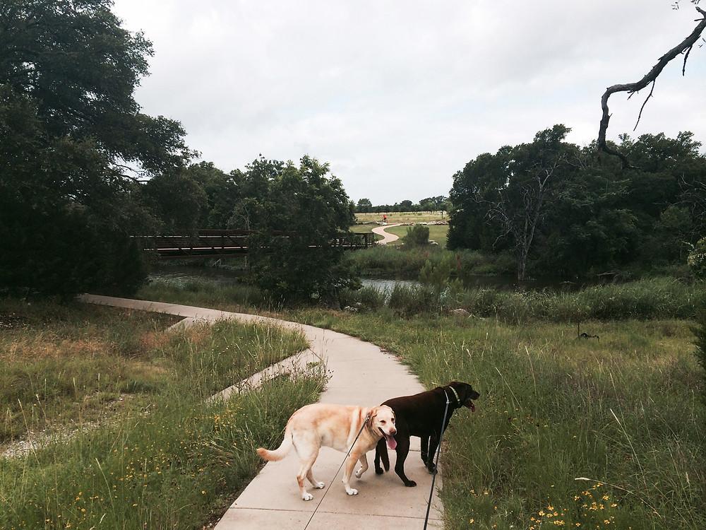 Brushy Creek Regional Trail - Smell The Wildflowers