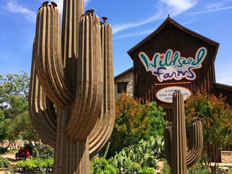 Wildseed Farms : One Amazing Adventure