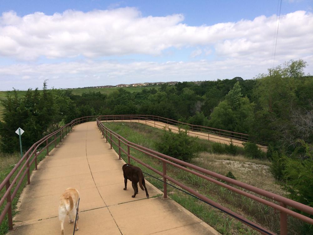 Brushy Creek Regional Trail Curves