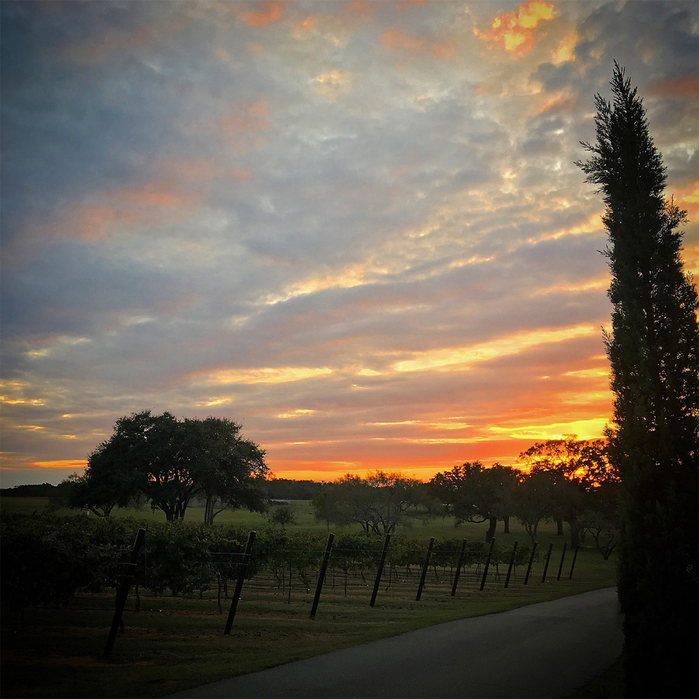 Grape Creek Vineyards, Fredericksburg